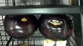 Male eggplant is on the left and the female is on the right